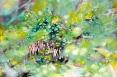 Awakening-3x2ft-oil on canvas-sold