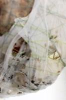 lisa-horlander-enshroud-close-up-mixed-media-about-12x6x6-in
